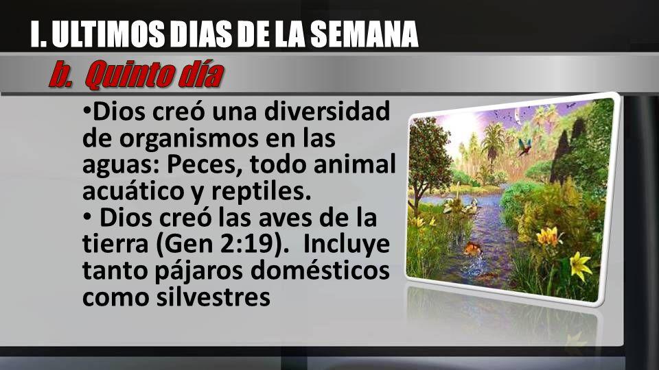 Dios creó una diversidad de organismos en las aguas: Peces, todo animal acuático y reptiles. Dios creó las aves de la tierra (Gen 2:19). Incluye tanto