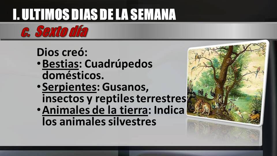 Dios creó: Bestias: Cuadrúpedos domésticos. Serpientes: Gusanos, insectos y reptiles terrestres Animales de la tierra: Indica los animales silvestres