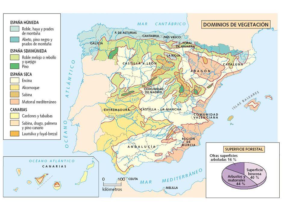3.LOS GRANDES CONJUNTOS FITOGEOGRÁFICOS Se distinguen en la Península y Baleares tres conjuntos florales: mediterráneo, eurosiberiano y de alta montaña (boreoalpino); Canarias es caso aparte El área mediterránea, la más extensa, se caracteriza por un clima de tipo mediterráneo, la vegetación presenta persistencia en las hojas que son esclerófilas, y un equilibrio ecológico muy frágil.