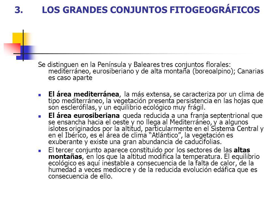 3.LOS GRANDES CONJUNTOS FITOGEOGRÁFICOS Se distinguen en la Península y Baleares tres conjuntos florales: mediterráneo, eurosiberiano y de alta montañ