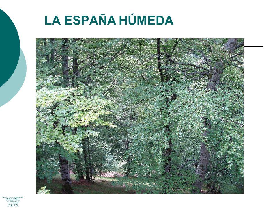 LA MONTAÑA PEDRO A.JURADO (COORDINADOR) MIGUEL A.