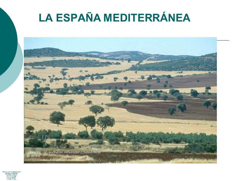 LA ESPAÑA MEDITERRÁNEA PEDRO A. JURADO (COORDINADOR) MIGUEL A. ALMENDROS FRANCISCO J. BERNAD YOLANDA CAMPILLO JUAN A. PALACIOS CARMEN PÉREZ Mª LUISA U