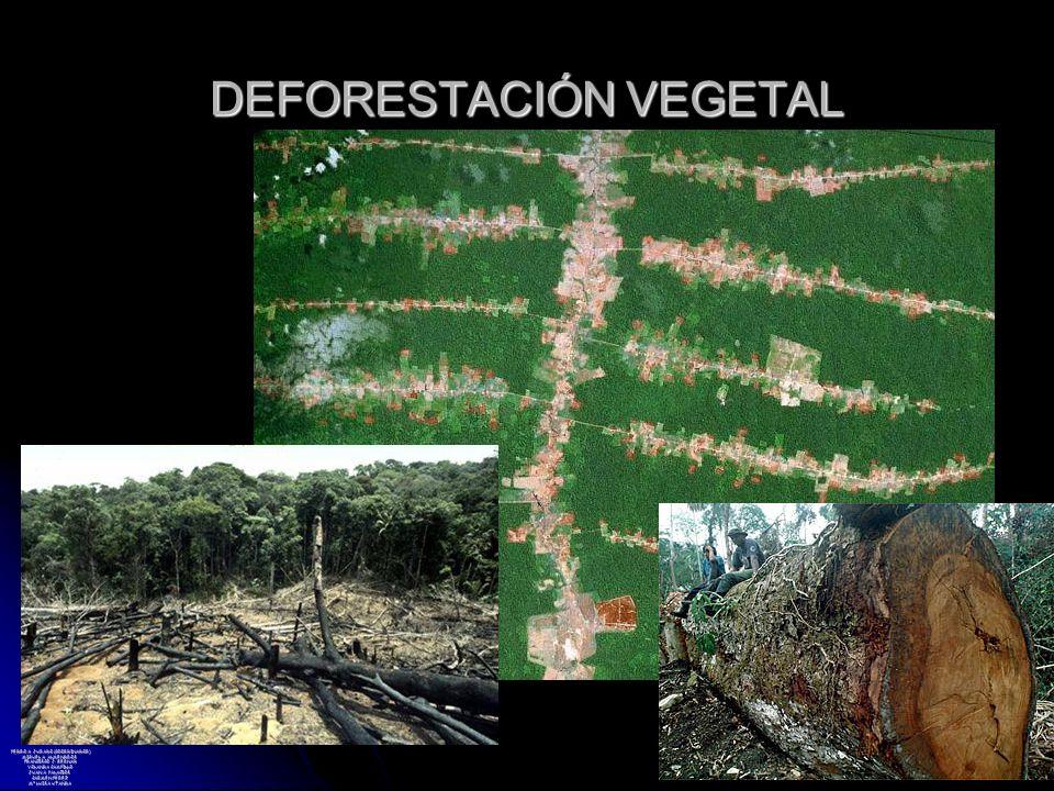 DEFORESTACIÓN VEGETAL PEDRO A. JURADO (COORDINADOR) MIGUEL A. ALMENDROS FRANCISCO J. BERNAD YOLANDA CAMPILLO JUAN A. PALACIOS CARMEN PÉREZ Mª LUISA UT