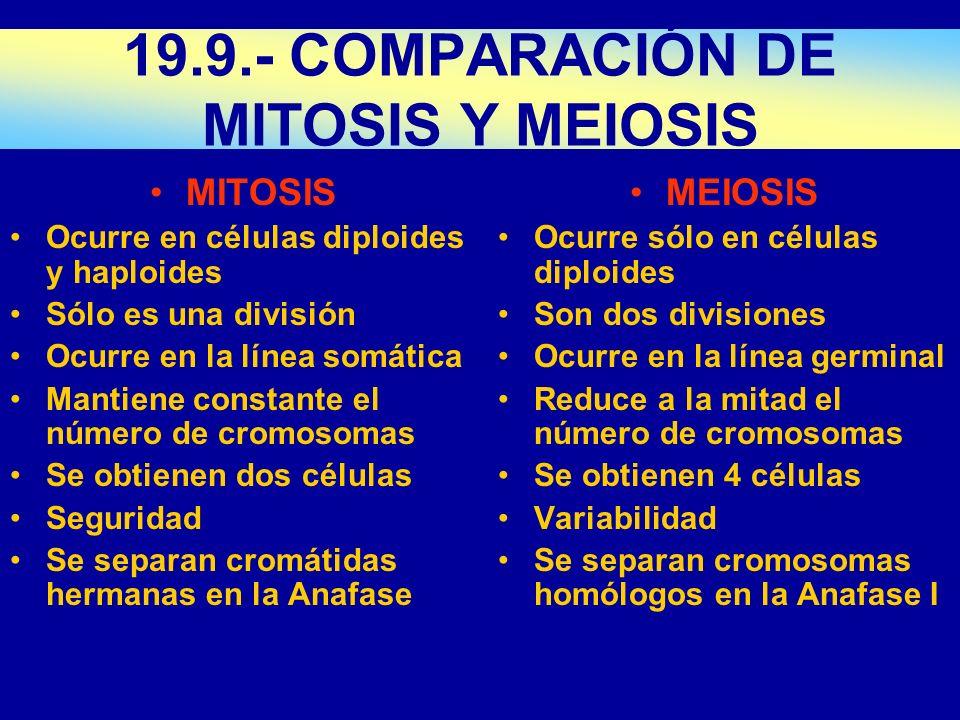 MITOSIS Ocurre en células diploides y haploides Sólo es una división Ocurre en la línea somática Mantiene constante el número de cromosomas Se obtiene