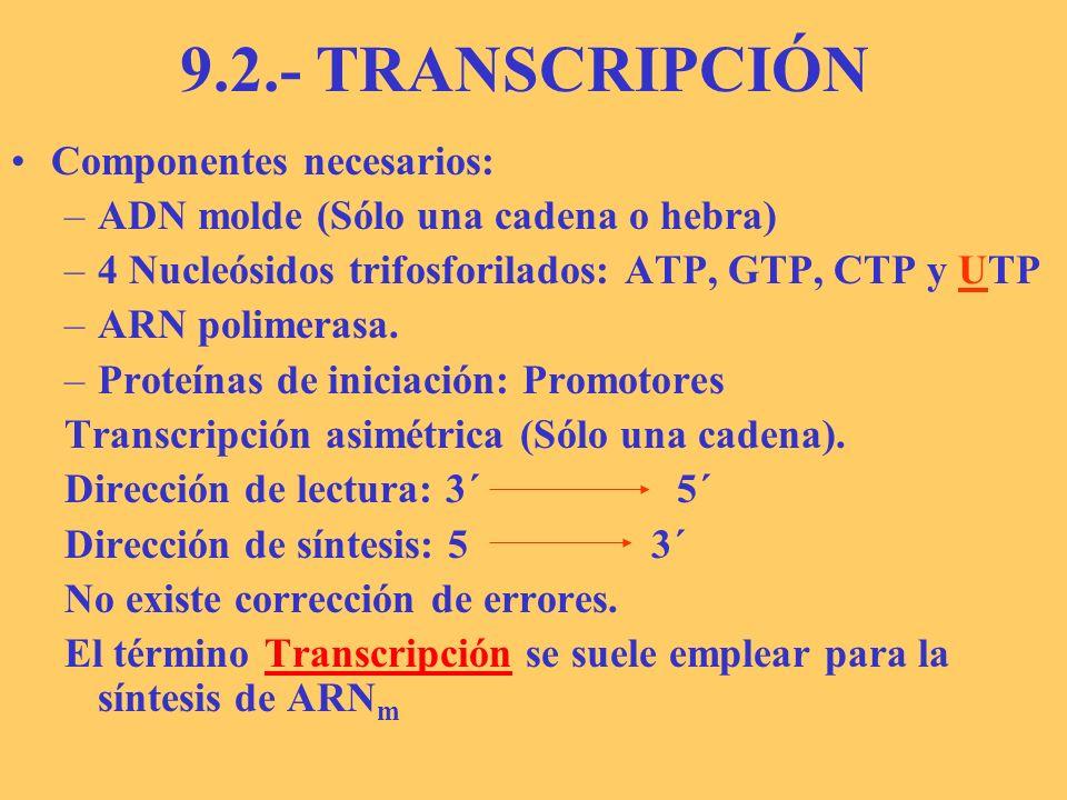 TRANSCRIPCIÓN Tres (Cuatro)fases: –Iniciación –Elongación –Terminación.