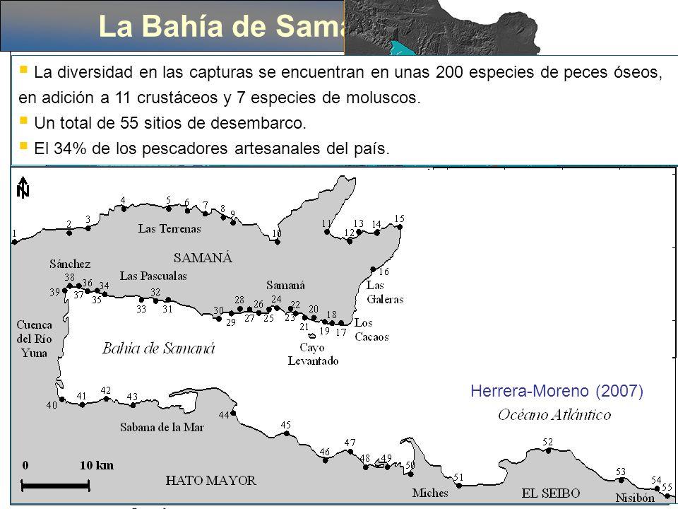 Importancia de la especie y su estadía en Samaná Mayor zona de apareamiento del Atlántico Norte, parte de un ciclo natural y milenario.