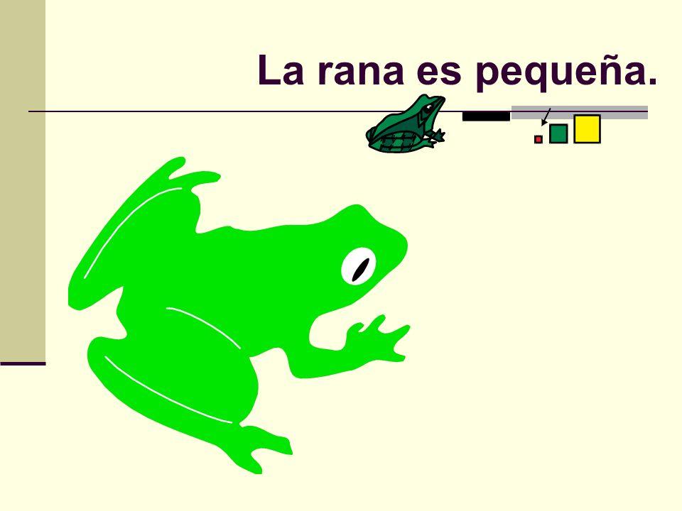 La rana es pequeña.
