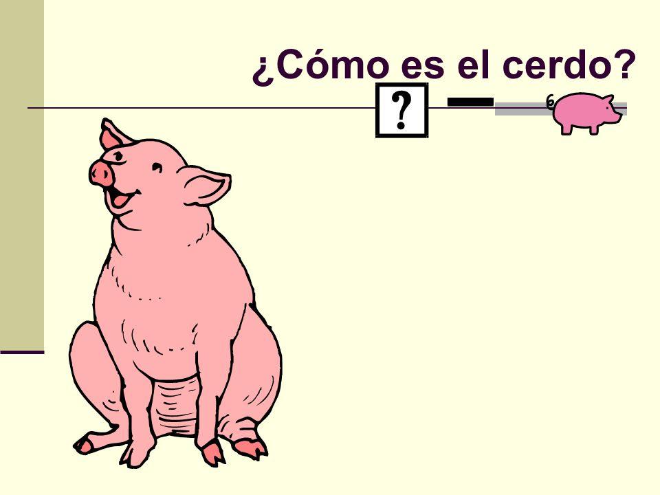 ¿Cómo es el cerdo?