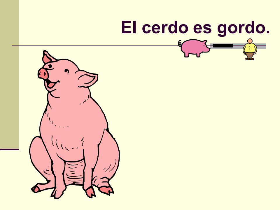 El cerdo es gordo.