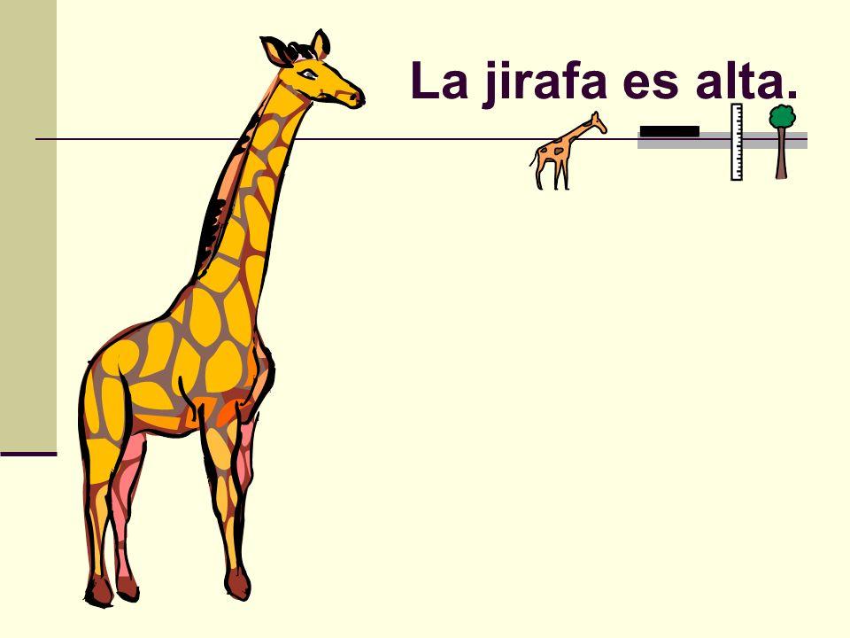 La jirafa es alta.