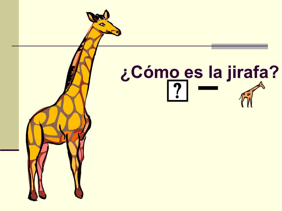 ¿Cómo es la jirafa?