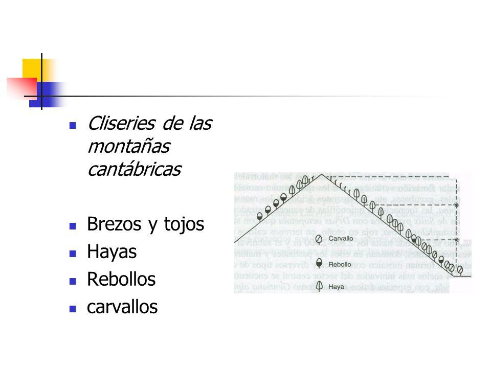 Cliseries de las montañas cantábricas Brezos y tojos Hayas Rebollos carvallos