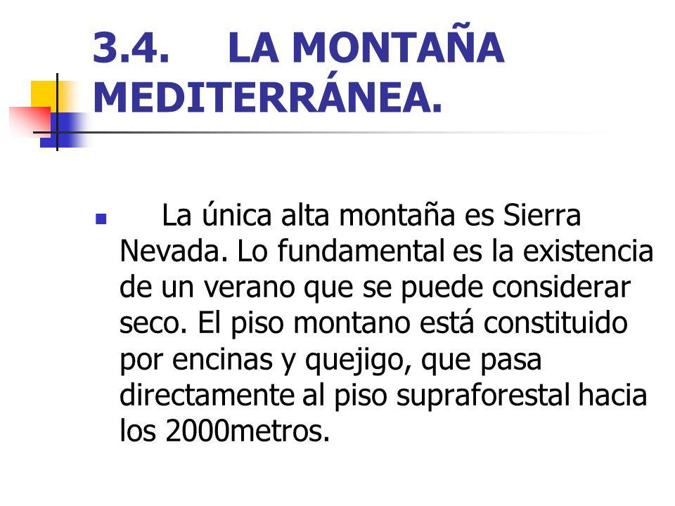 3.4.LA MONTAÑA MEDITERRÁNEA. La única alta montaña es Sierra Nevada. Lo fundamental es la existencia de un verano que se puede considerar seco. El pis