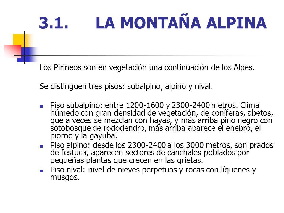 3.1.LA MONTAÑA ALPINA Los Pirineos son en vegetación una continuación de los Alpes. Se distinguen tres pisos: subalpino, alpino y nival. Piso subalpin