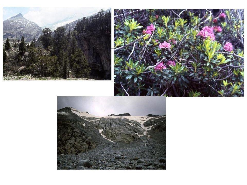 a: prado alpino b: pinar de pino negro c: pinar de pino silvestre d: hayedo e: robledal de Quercus pubescens f: fresneda g: aliseda h: matorrales i: pastos j: prados de siega k: cultivos Vegetación potencial y actual de un valle pirenaico