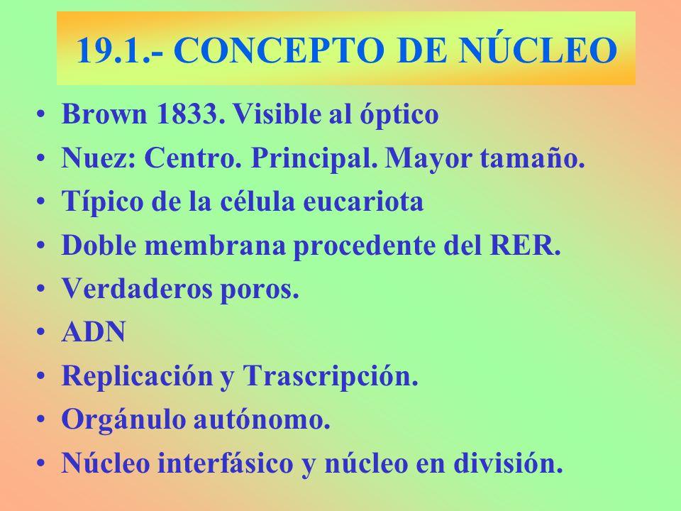 Membrana nuclear 19.1.- ESTRUCTURA DEL NÚCLEO