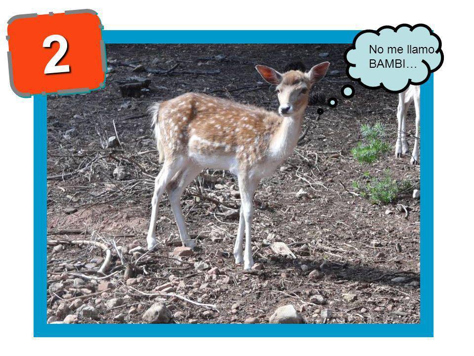 22 No me llamo BAMBI…