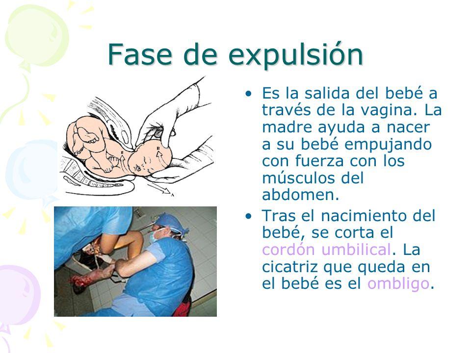 Fase de expulsión Es la salida del bebé a través de la vagina.