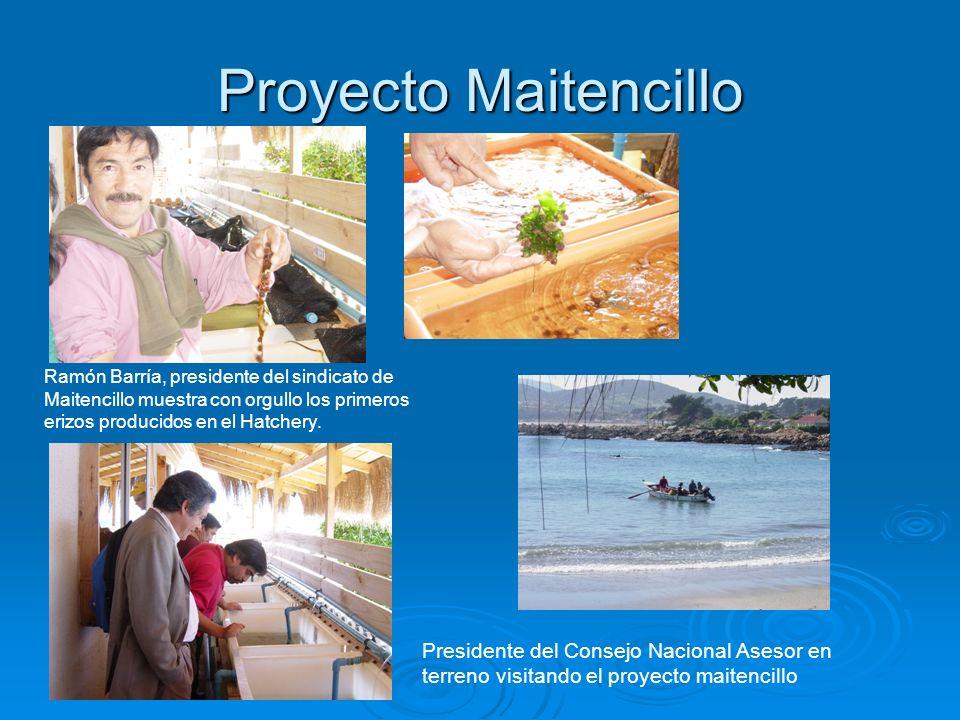 Proyecto Maitencillo Ramón Barría, presidente del sindicato de Maitencillo muestra con orgullo los primeros erizos producidos en el Hatchery. Presiden
