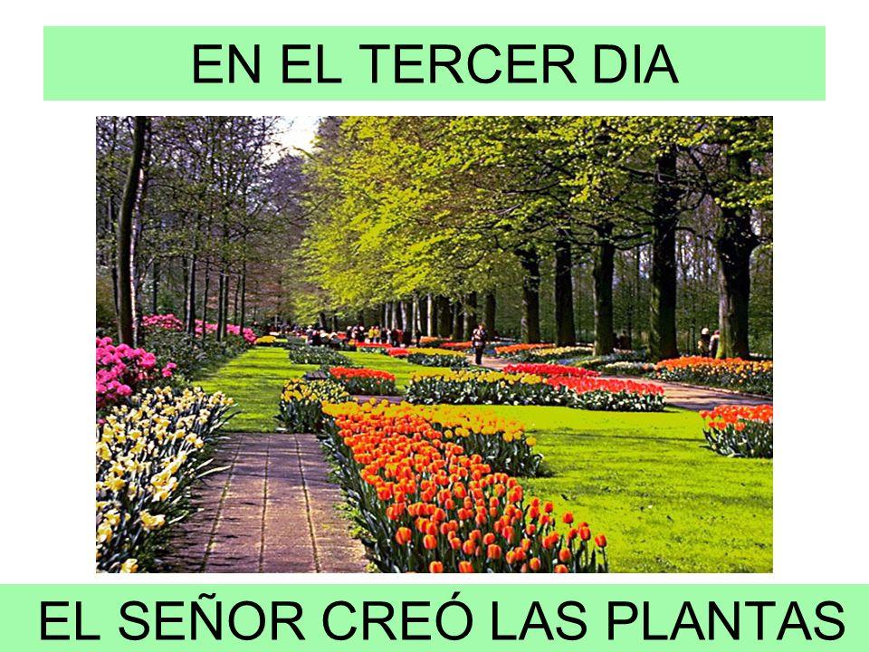 EN EL TERCER DIA EL SEÑOR CREÓ LAS PLANTAS