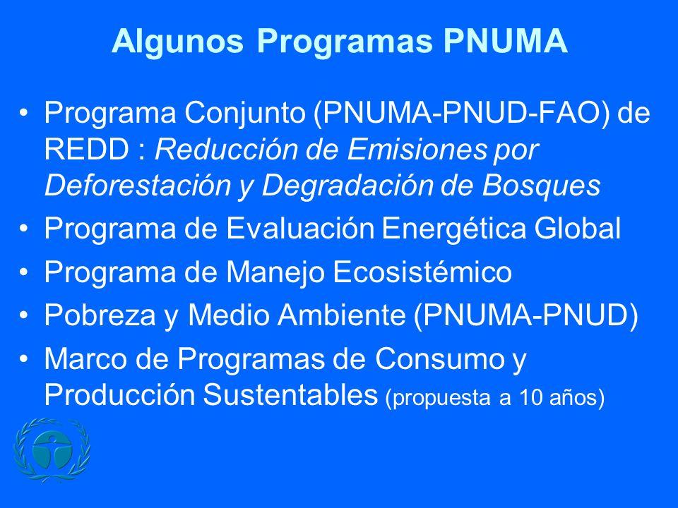 Algunos Programas PNUMA Programa Conjunto (PNUMA-PNUD-FAO) de REDD : Reducción de Emisiones por Deforestación y Degradación de Bosques Programa de Evaluación Energética Global Programa de Manejo Ecosistémico Pobreza y Medio Ambiente (PNUMA-PNUD) Marco de Programas de Consumo y Producción Sustentables (propuesta a 10 años)
