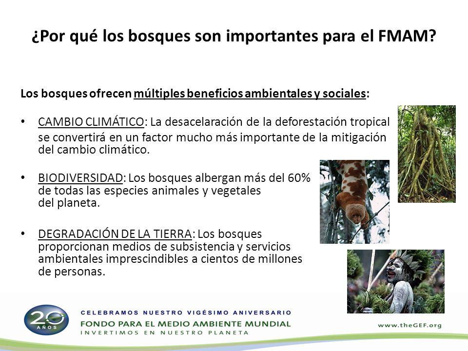 ¿Por qué los bosques son importantes para el FMAM? Los bosques ofrecen múltiples beneficios ambientales y sociales: CAMBIO CLIMÁTICO: La desacelaració