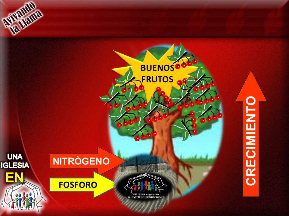 CRECIMIENTO NITRÒGENO FOSFORO BUENOS FRUTOS BUENOS FRUTOS