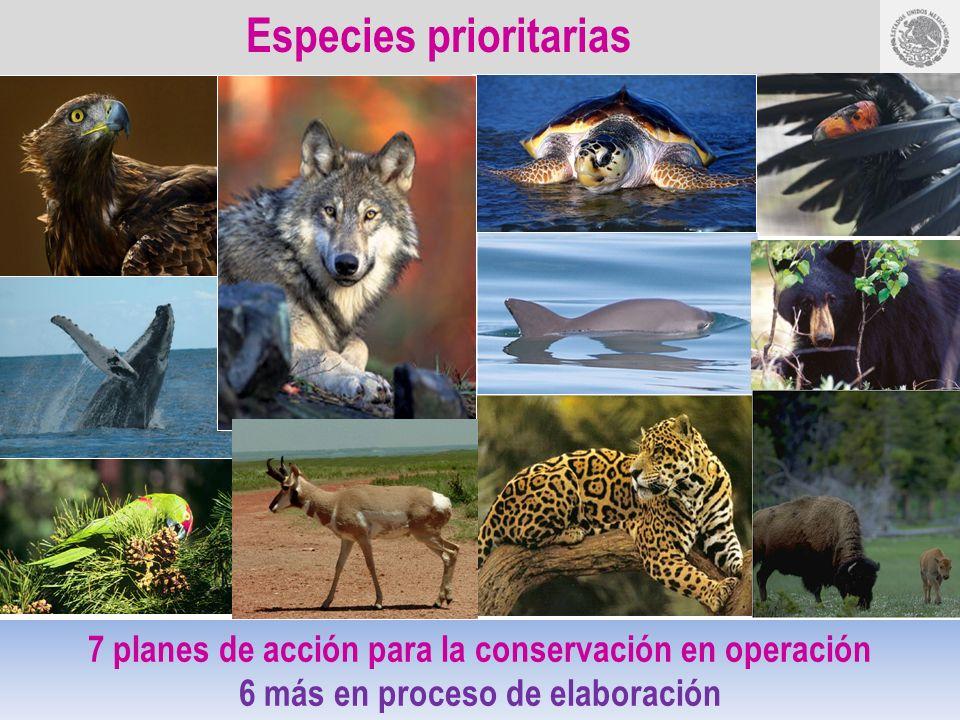 Especies prioritarias 7 planes de acción para la conservación en operación 6 más en proceso de elaboración