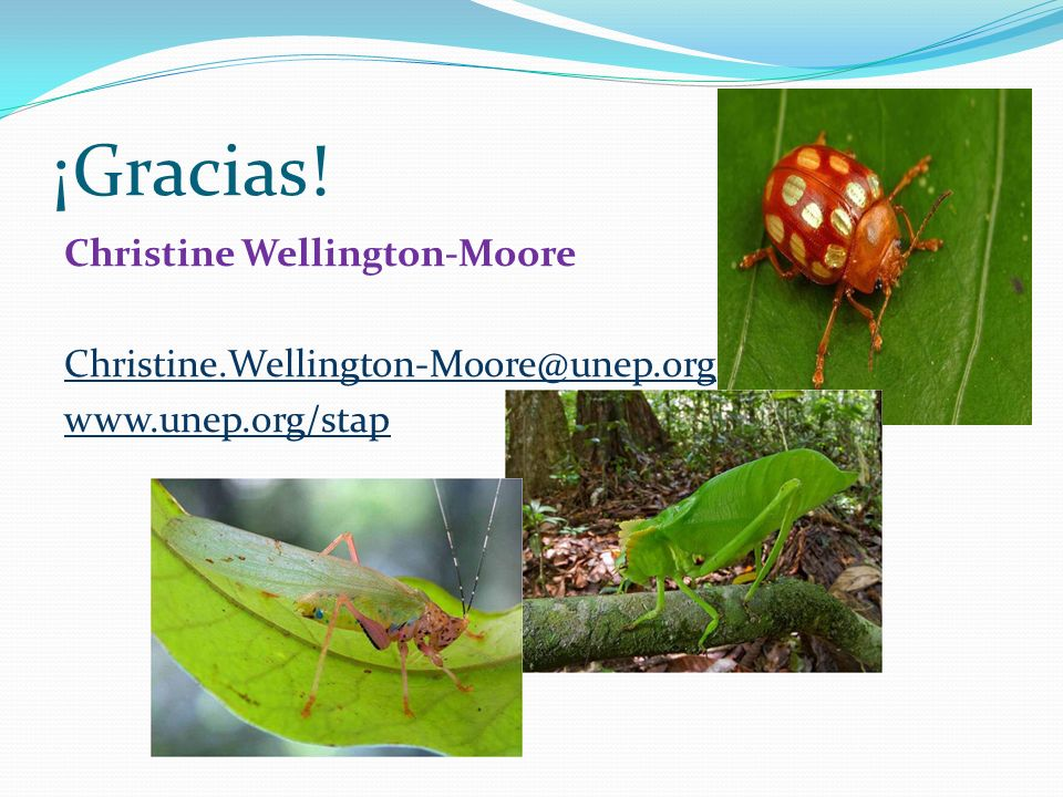 ¡Gracias! Christine Wellington-Moore Christine.Wellington-Moore@unep.org www.unep.org/stap