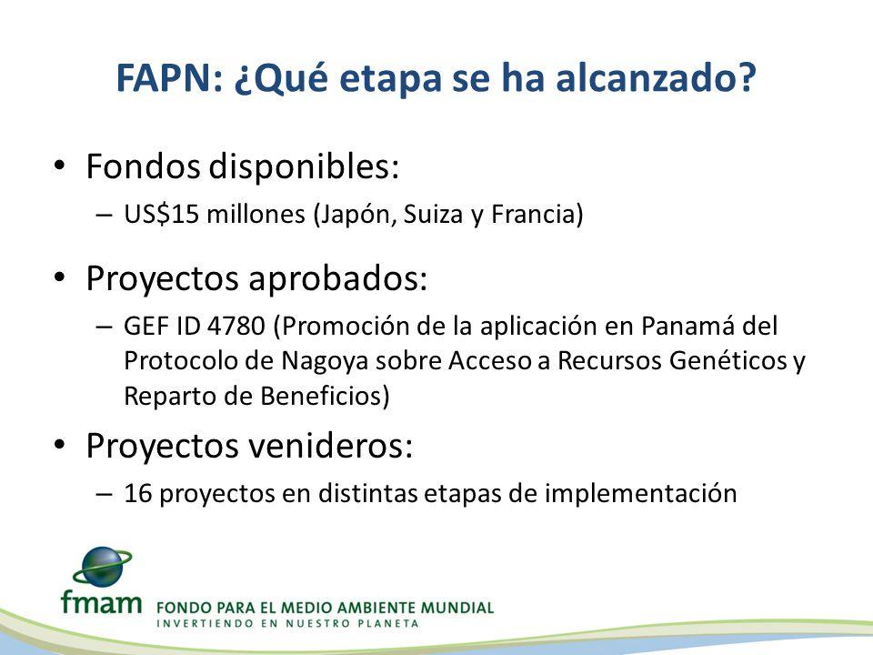 FAPN: ¿Qué etapa se ha alcanzado.