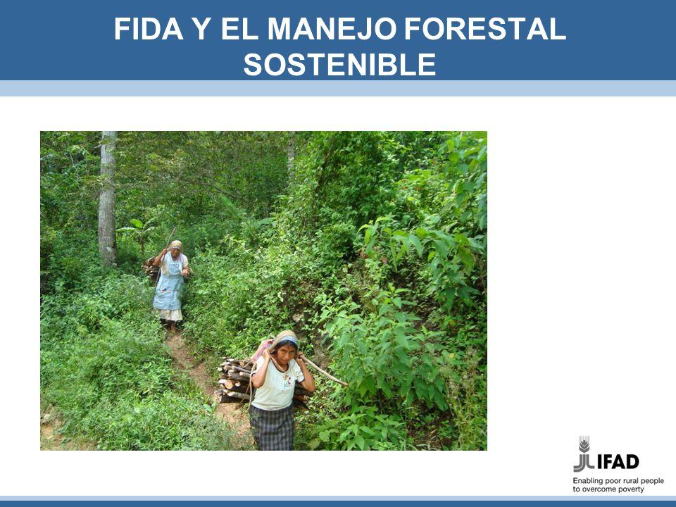 Promoviendo sinergias basadas en el paisaje Manejo forestal sostenible, una herramienta estratégica para conseguir los fines de FIDA y GEF A través del MFS, FIDA fomenta sinergias entre la reducción de pobreza, desarrollo agrario y la consecución de beneficios ambientales, basado en la visión amplia de paisaje FIDA, socio activo en Programa MFS del GEF: 5 proyectos, de los cuales 3 en América Latina Un proyecto fomenta REDD+ (Mexico) Dos proyectos promueven MFS (Ecuador y Perú) Otros dos proyectos apoyan GST y reforestación basados en CUTF (Panamá y Venezuela)