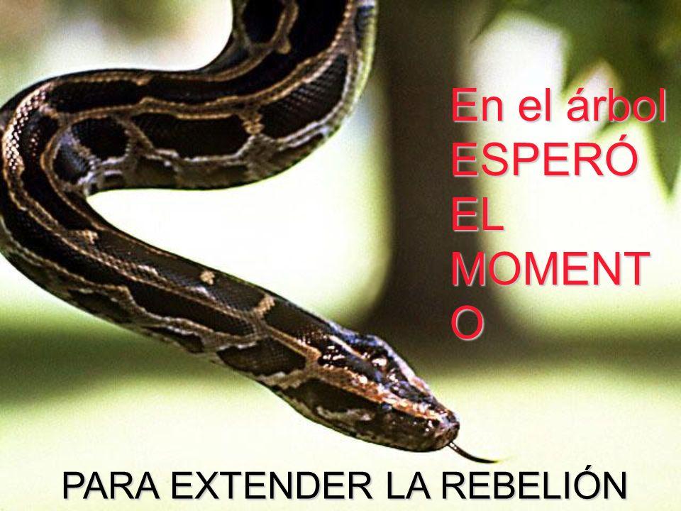 En el árbol ESPERÓ EL MOMENT O PARA EXTENDER LA REBELIÓN PARA EXTENDER LA REBELIÓN