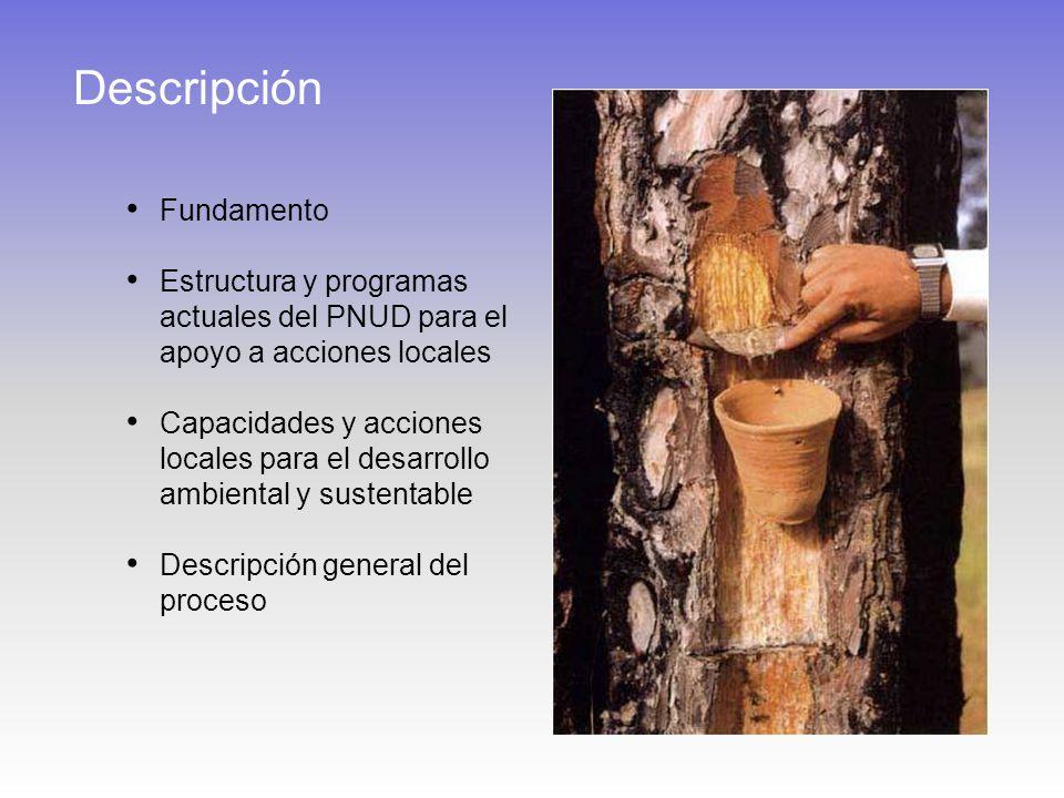 Descripción Fundamento Estructura y programas actuales del PNUD para el apoyo a acciones locales Capacidades y acciones locales para el desarrollo ambiental y sustentable Descripción general del proceso