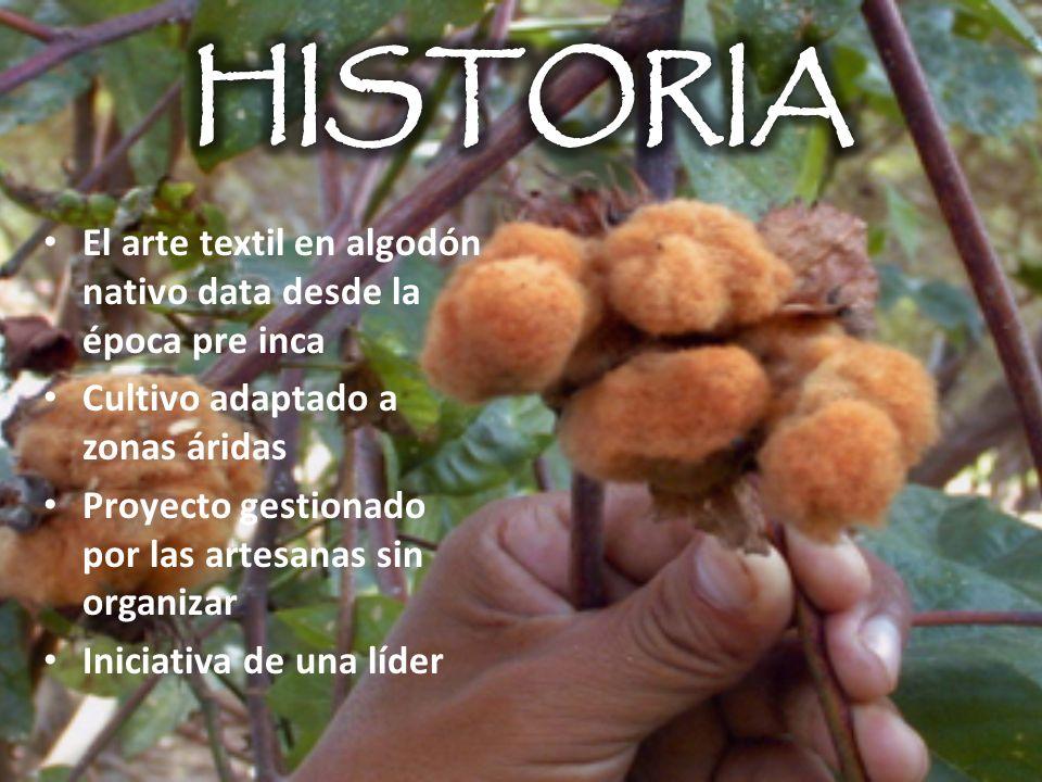 El arte textil en algodón nativo data desde la época pre inca Cultivo adaptado a zonas áridas Proyecto gestionado por las artesanas sin organizar Inic