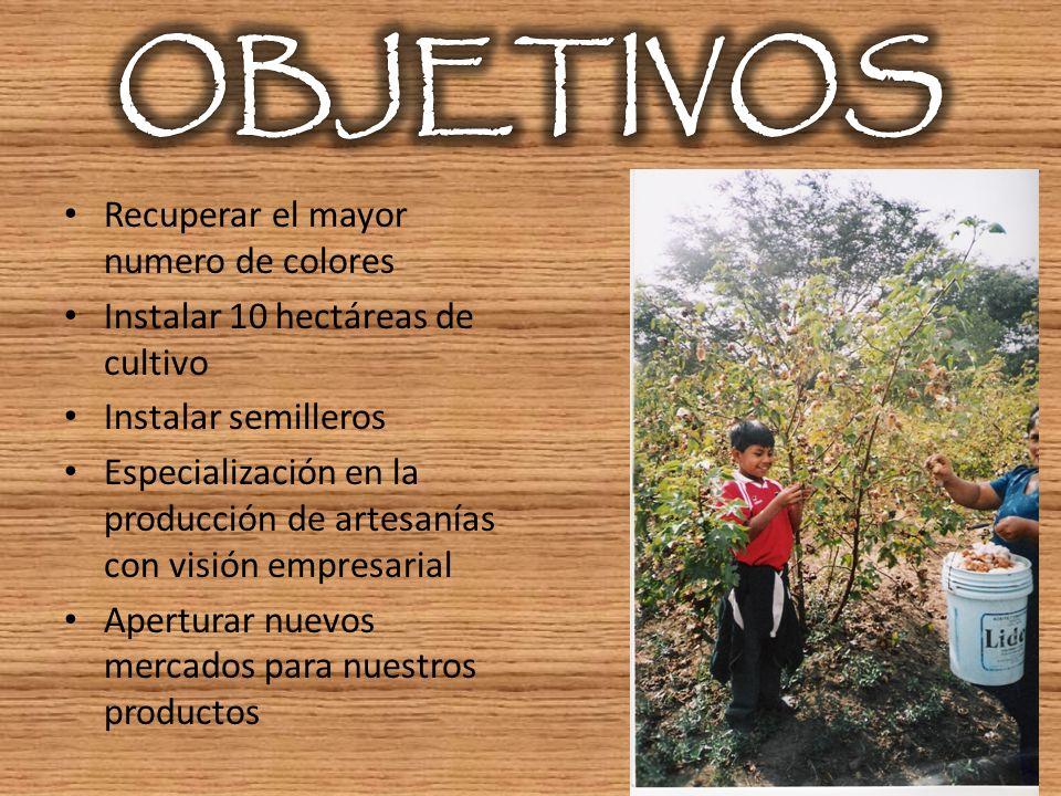 Recuperar el mayor numero de colores Instalar 10 hectáreas de cultivo Instalar semilleros Especialización en la producción de artesanías con visión em