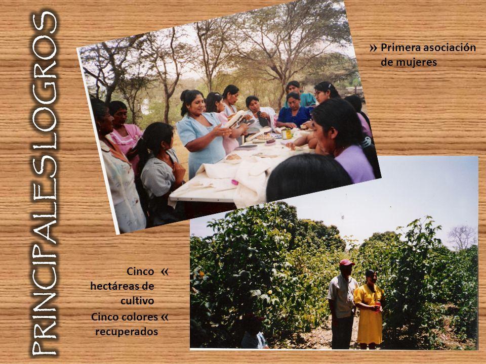 Primera asociación de mujeres » Cinco hectáreas de cultivo Cinco colores recuperados « «