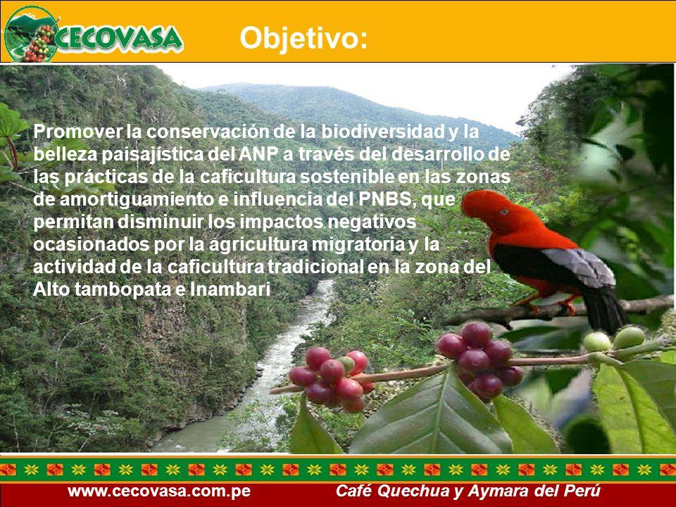 www.cecovasa.com.pe Café Quechua y Aymara del Perú Objetivos específicos Orientar a todos los productores del Programa de Café especiales, sobre la producción eco-sostenible, amigable con la biodiversidad y el medio ambiente, estableciendo criterios de producción, conforme a las normas y reglamentos de producción ecológica, sostenible, C.A.F.E.