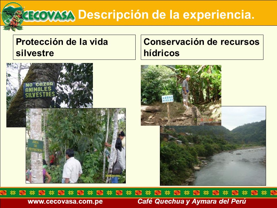 www.cecovasa.com.pe Café Quechua y Aymara del Perú Trato justo y buenas condiciones para los trabajadores Salud y seguridad ocupacional Descripción de la experiencia.