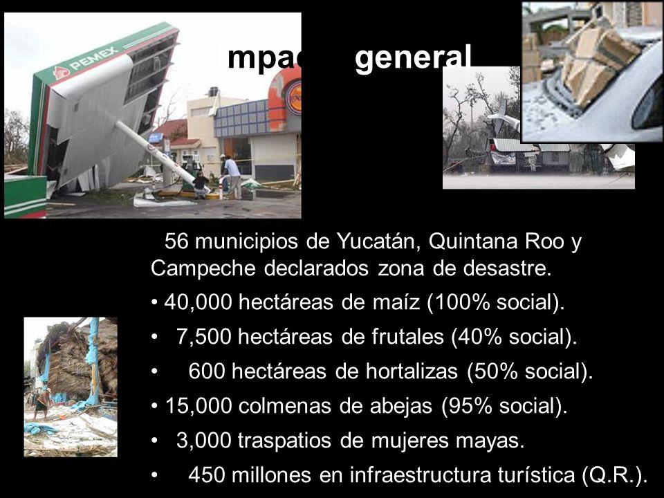 Impacto general 56 municipios de Yucatán, Quintana Roo y Campeche declarados zona de desastre. 40,000 hectáreas de maíz (100% social). 7,500 hectáreas