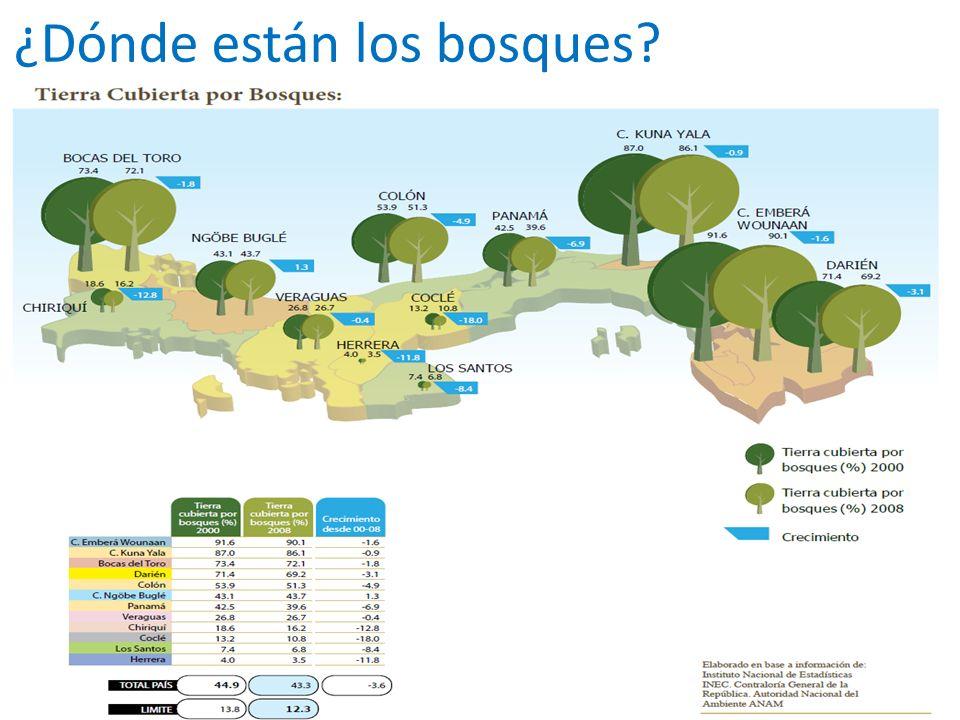 ¿Dónde están los bosques?