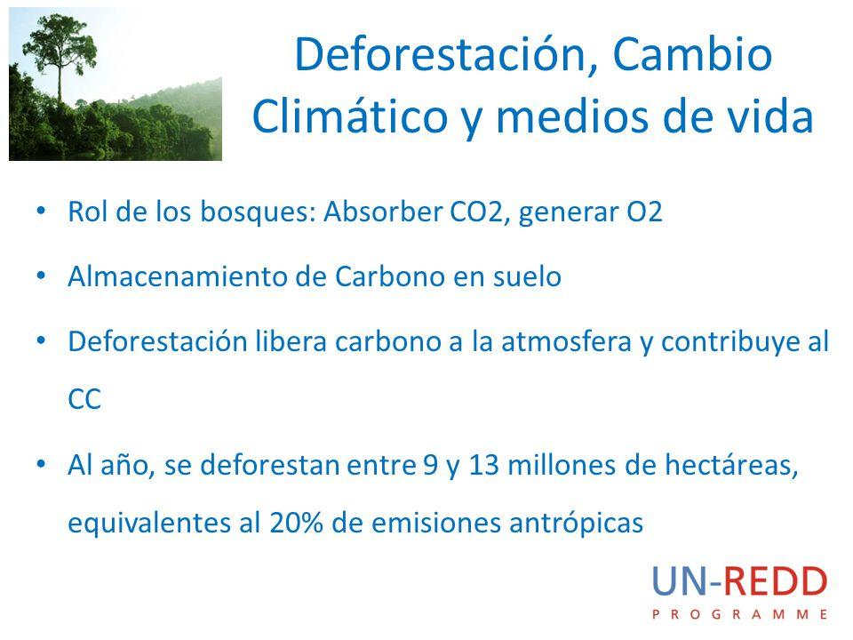 Deforestación, Cambio Climático y medios de vida Rol de los bosques: Absorber CO2, generar O2 Almacenamiento de Carbono en suelo Deforestación libera carbono a la atmosfera y contribuye al CC Al año, se deforestan entre 9 y 13 millones de hectáreas, equivalentes al 20% de emisiones antrópicas