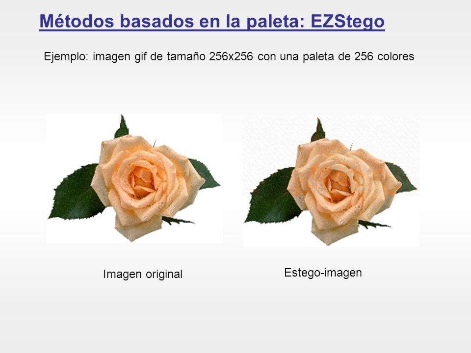 Métodos basados en la paleta: EZStego Imagen original Estego-imagen Ejemplo: imagen gif de tamaño 256x256 con una paleta de 256 colores