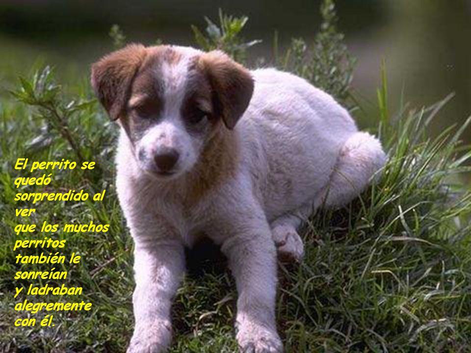 El perrito comenzó a mover la cola, y levantó sus orejas poco a poco. Los muchos perros del lugar hicieron lo mismo. Luego sonrió y le ladró alegremen