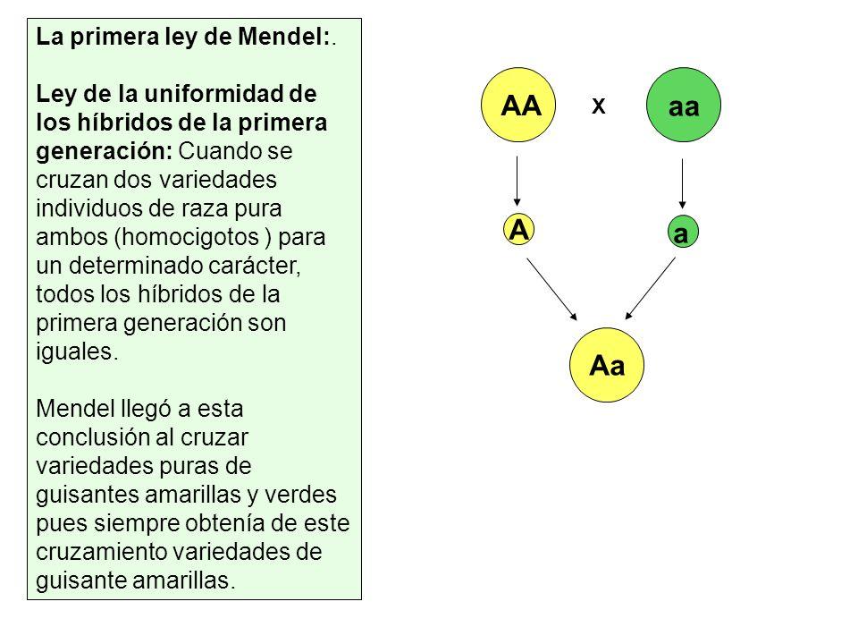 La primera ley de Mendel:. Ley de la uniformidad de los híbridos de la primera generación: Cuando se cruzan dos variedades individuos de raza pura amb