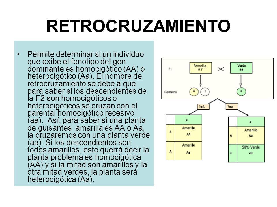 RETROCRUZAMIENTO Permite determinar si un individuo que exibe el fenotipo del gen dominante es homocigótico (AA) o heterocigótico (Aa). El nombre de r