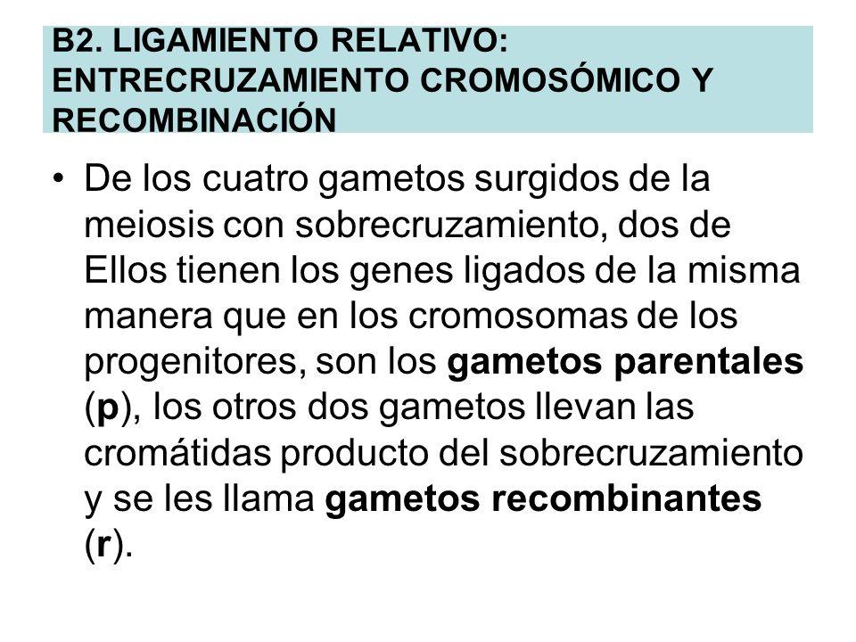 B2. LIGAMIENTO RELATIVO: ENTRECRUZAMIENTO CROMOSÓMICO Y RECOMBINACIÓN De los cuatro gametos surgidos de la meiosis con sobrecruzamiento, dos de Ellos