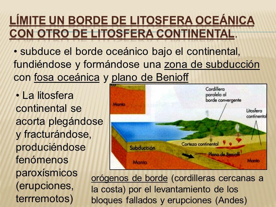 subduce el borde oceánico bajo el continental, fundiéndose y formándose una zona de subducción con fosa oceánica y plano de Benioff La litosfera conti