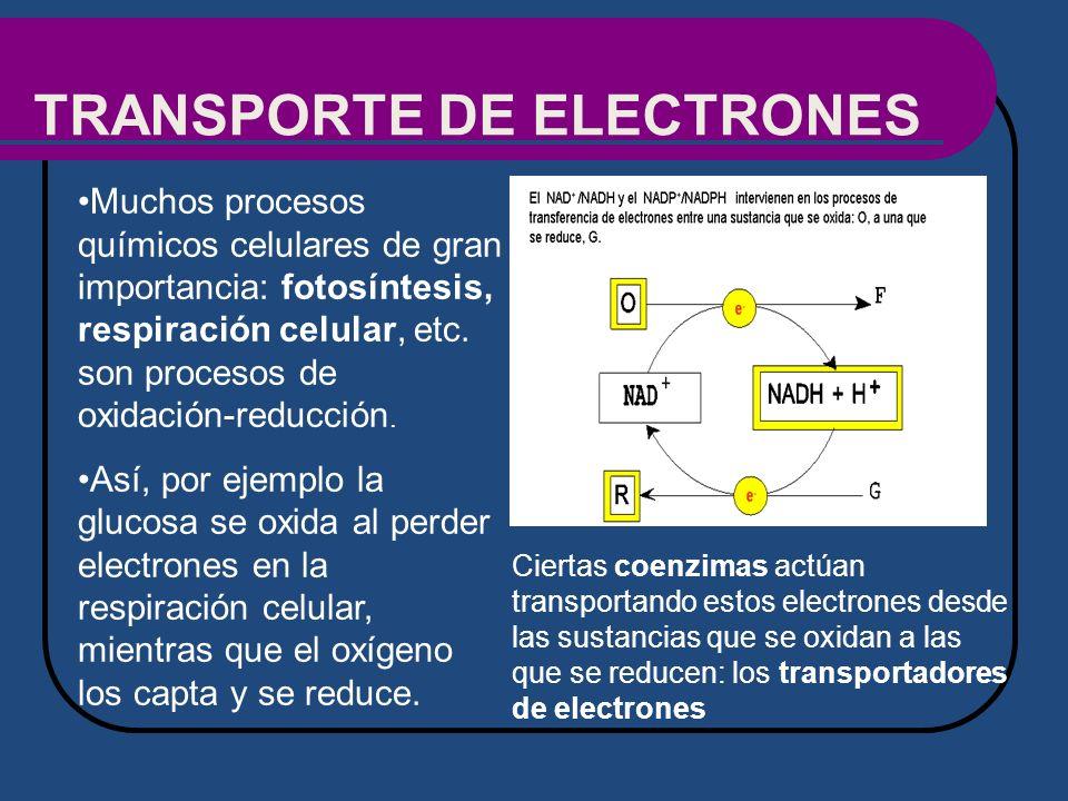 TRANSPORTE DE ELECTRONES Muchos procesos químicos celulares de gran importancia: fotosíntesis, respiración celular, etc. son procesos de oxidación-red