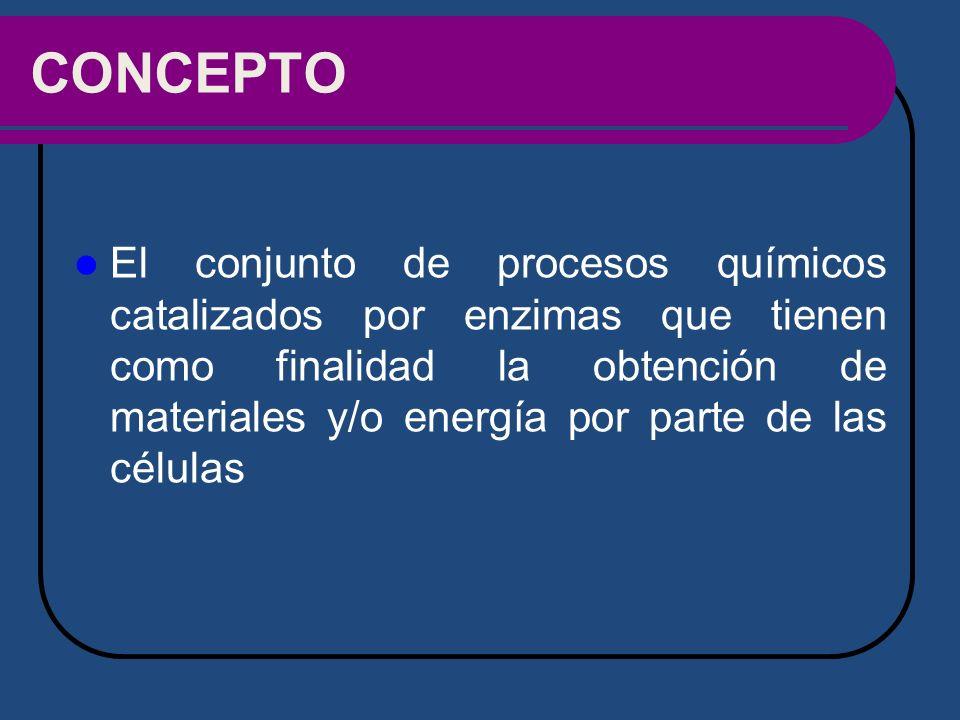 CONCEPTO El conjunto de procesos químicos catalizados por enzimas que tienen como finalidad la obtención de materiales y/o energía por parte de las cé
