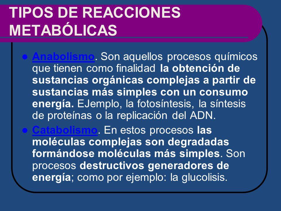 TIPOS DE REACCIONES METABÓLICAS Anabolismo. Son aquellos procesos químicos que tienen como finalidad la obtención de sustancias orgánicas complejas a